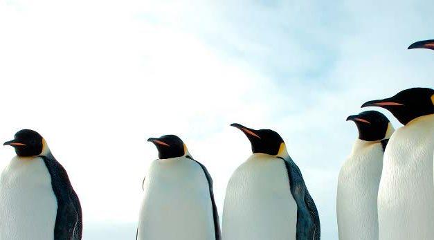 Especial Pingüinos 2014